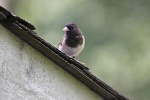 Baby Bird Update, cookdrinkhike.wordpress.com