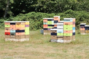 Every year a guy puts his honey bees in G&G's field. Their reward? A gallon of honey.