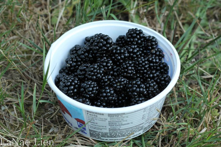 The husband picked a couple of containers of blackberries while I picked apples.
