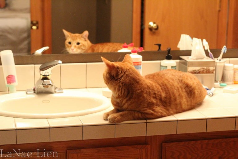 Contemplating his miserable life (and wondering who that handsome cat in the mirror is).