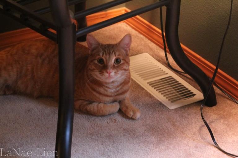 Orphan Cat, cookdrinkhike.wordpress.com