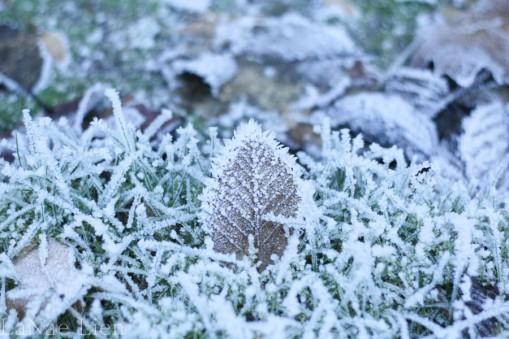 Frozen, cookdrinkhike.wordpress.com