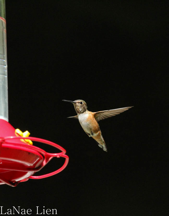 Hummingbirds, wishingmylifeaway.com