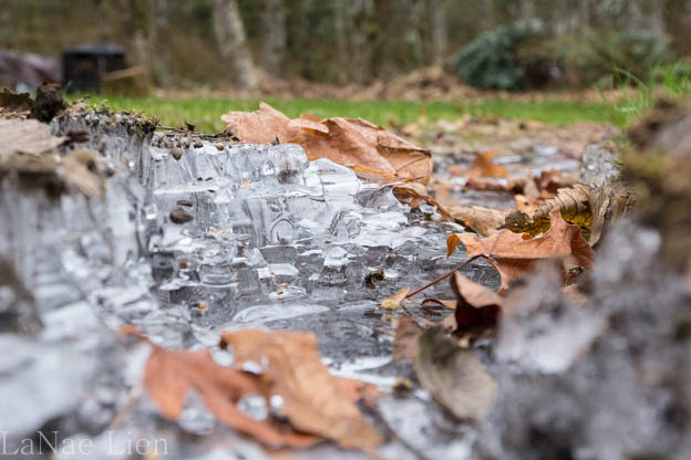 20170107-geese-frost-heaves-67