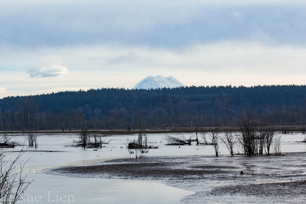 20170129-nisqually-65-copy