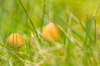 20170304-crocus, mushroom-32