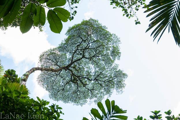 20170419-Costa Rica-26