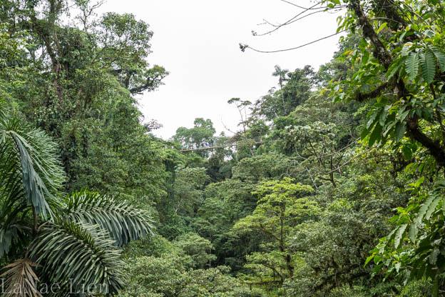 20170419-Costa Rica-67