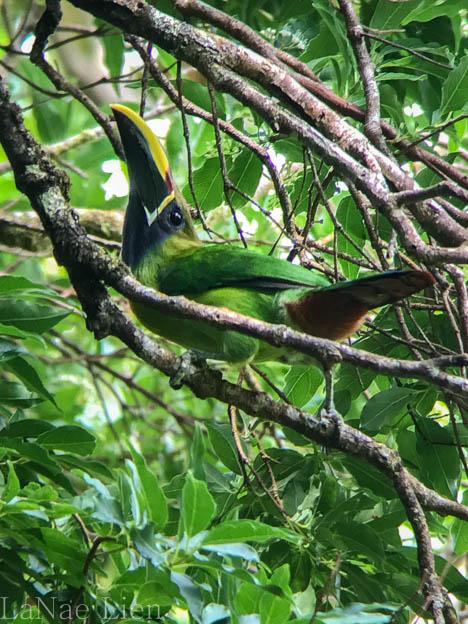20170423-Costa Rica-60