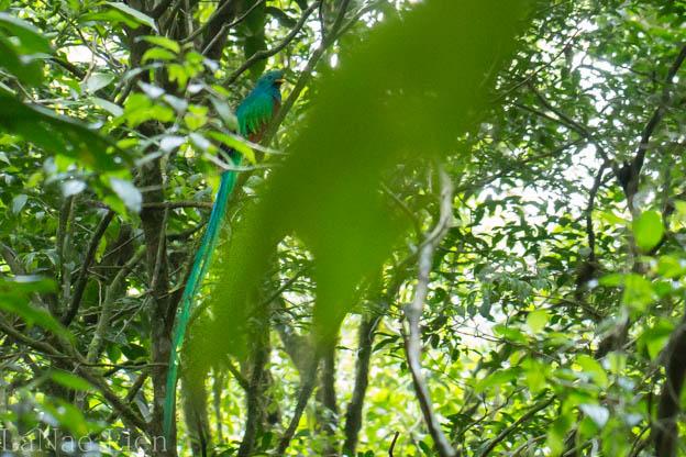 20170424-Costa Rica-265