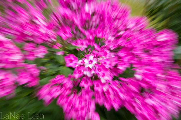 20170722-zooming flowers-135-2