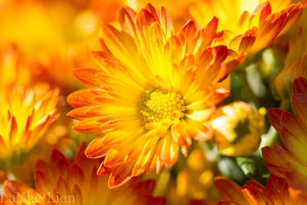 20170901-flowers-28-2