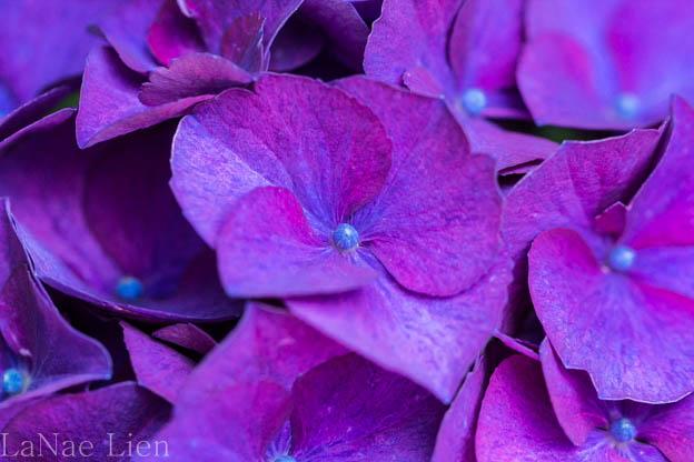 20170723-flowers-31-2