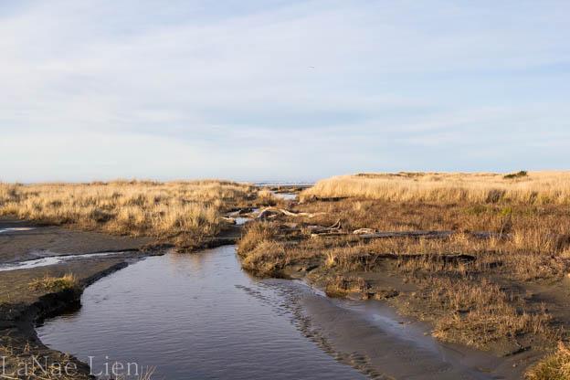 20180113-Quinault-ocean shores-119