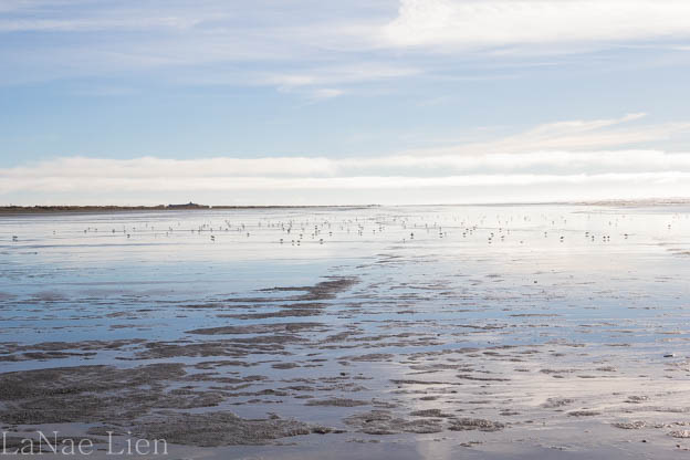 20180113-Quinault-ocean shores-29