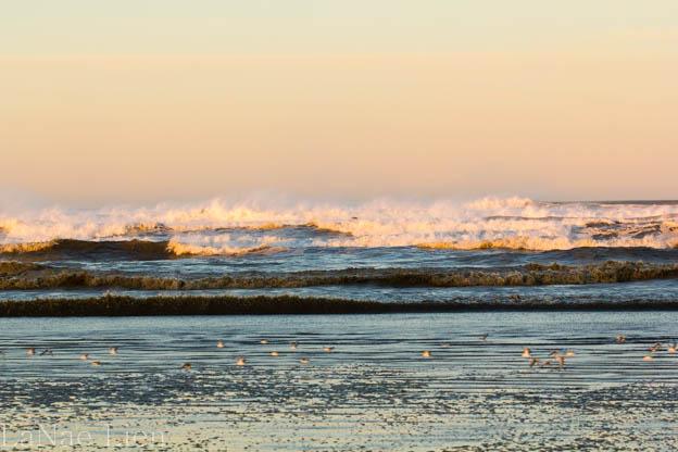 20180114-Quinault-ocean shores-40