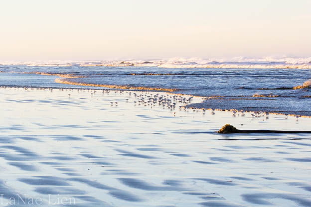 20180114-Quinault-ocean shores-59