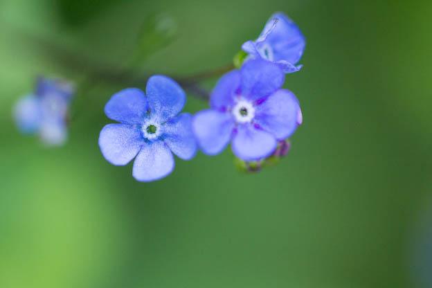 spring flowers, etc-107