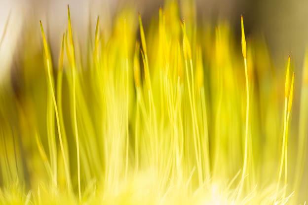 spring flowers, etc-59