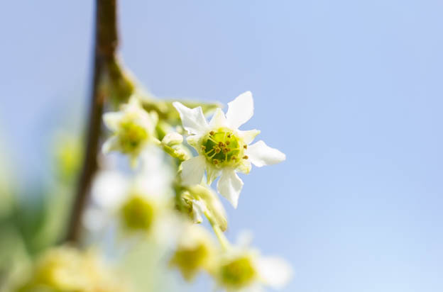 spring flowers, etc-87